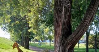 Sigue preocupando la caída de grandes ramas en la Pista de Salud