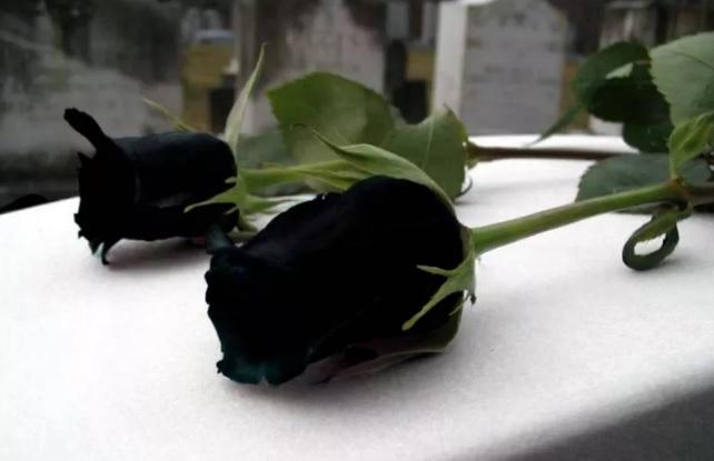 Falleció el 19-09-2018 en Clínica Centro Junín