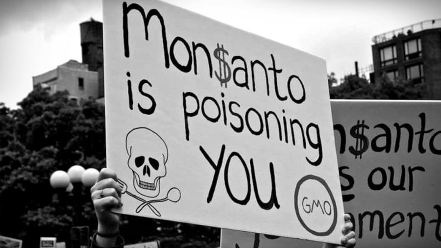 Un jurado reunido en San Francisco, EE UU, dio por probado que el herbicida Roundup (glifosato), contribuyó a que Edwin Hardeman contrajera el cáncer conocido como Linfoma No Hodgkin.