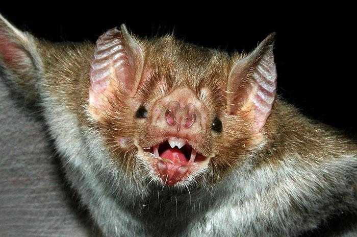 La Dirección de Bromatología del Municipio de Rojas, dependiente de la Secretaría de Salud, informó que ha dado positivo uno de los estudios de rabia realizados a un murciélago que fue encontrado en un hogar de Rojas.