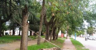 Cayó un árbol de la Plaza Moreno