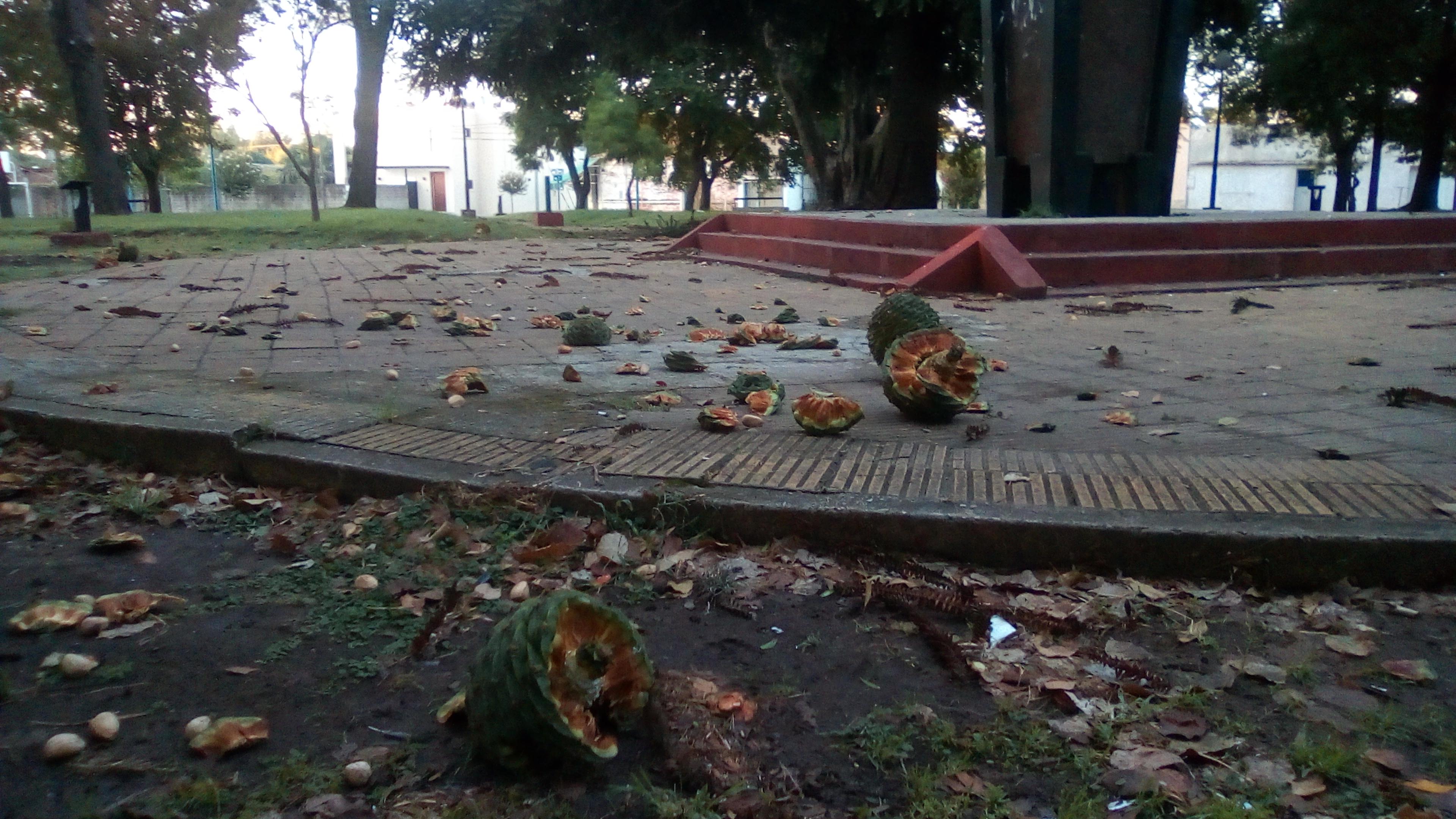 La tormenta del pasado domingo 3 de marzo por la noche y madrugada del lunes 4 produjo este fenómeno en la Plaza Moreno.