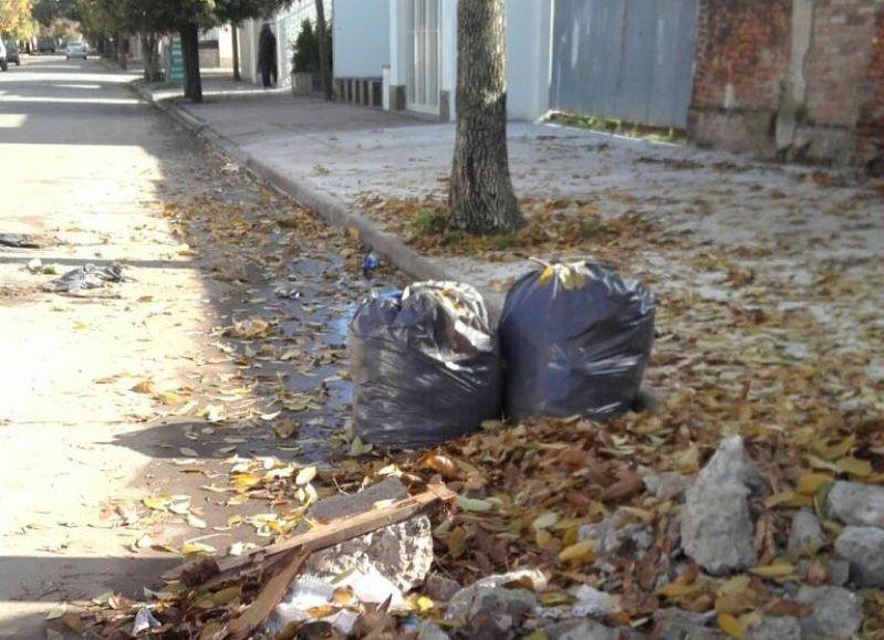 Oto o mugriento a la falta de limpieza se suma la for Arboles que no pierden sus hojas en otono