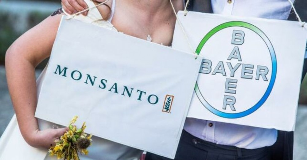 Monsanto se vanagloria del aumento de ventas de su herbicida con glifosato Roundup en plena oleada de demandas por su efecto cancerígeno