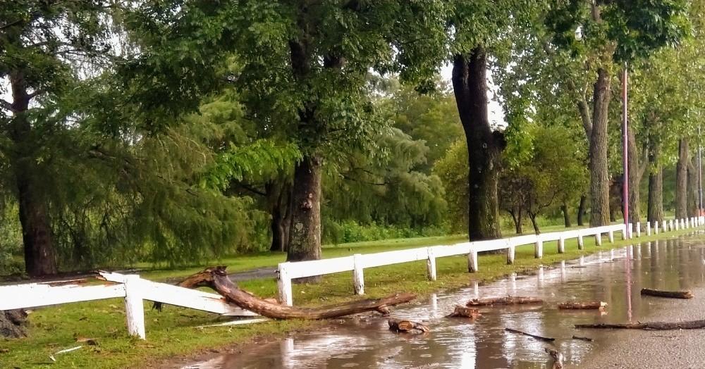 Se reiteran las caídas de árboles y ramas.