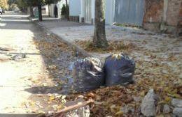 Otoño mugriento: A la falta de limpieza se suma la incesante caída de hojas