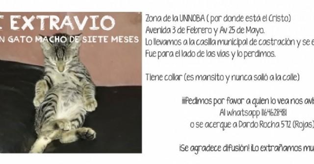 Buscan un gato que se extravió en la explanada del edificio de la UNNOBA