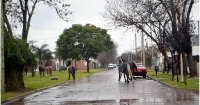 A casi siete meses del accidente del rojense Arechaga, la cuestión de caballos sueltos sigue siendo un problema
