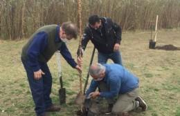 Camuzzi y el Municipio plantaron 16 árboles en el Paseo de la Ribera