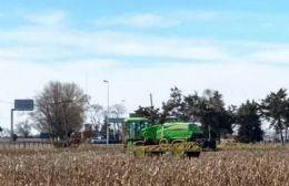 Denuncian manejo abusivo y descontrolado de agroquímicos en zonas rurales, semirrurales y rurales.