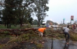 Cayó un árbol sobre Ruta 188