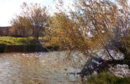 El Municipio interviene en los márgenes del Río Rojas