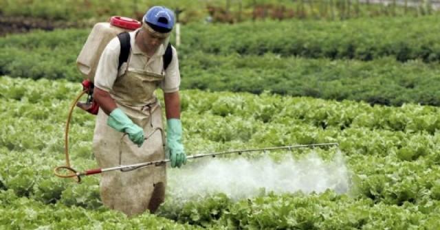 Los agrotóxicos son venenos que pueden producir cáncer, daño genético y afectar el sistema hormonal y nervioso humano.