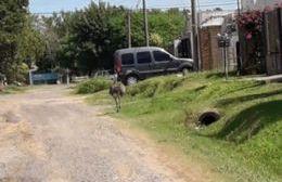 Habría sido visto por Barrio Progreso este miércoles 13 de febrero.