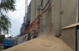 Preocupación por la rotura de un silo de AFA: enorme derrame de cereal