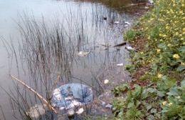 Continúan arrojando plásticos, vidrios y residuos al Río Rojas