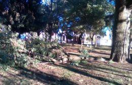 Cayó una rama de gran tamaño en la Plaza Moreno