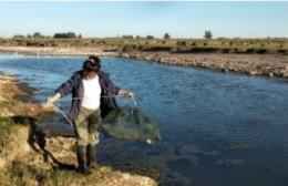Pergamino: según el CONICET, ocho de cada diez peces están contaminados